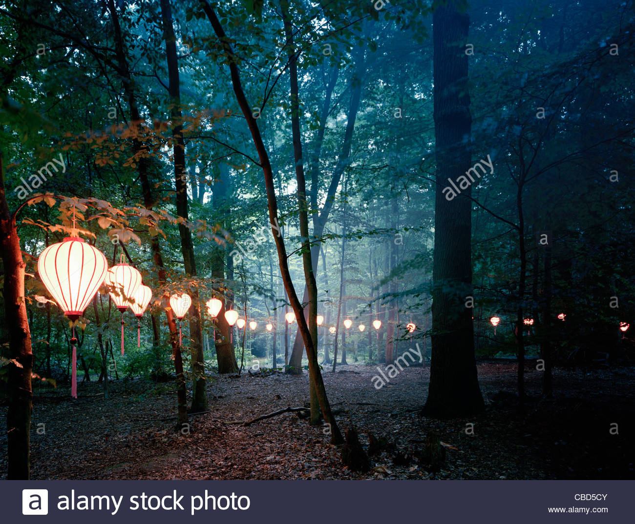 Fall Fairy Wallpaper Lights Hanging From Trees In Forest Stock Photo 41471611