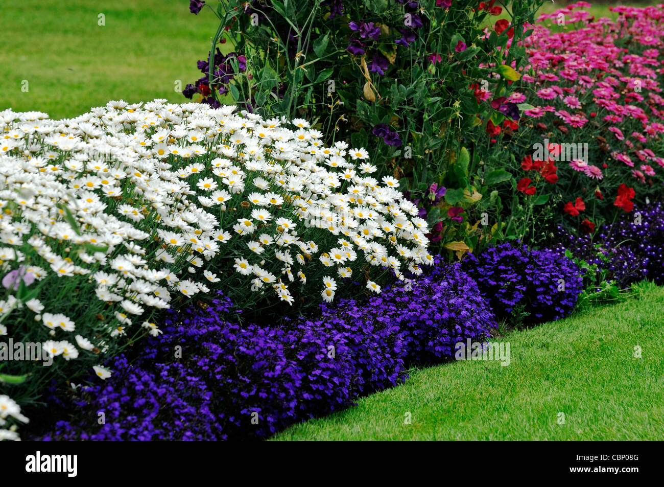 Plant Bed Summer Flowering Flowers Herbaceous Border Bed Flower
