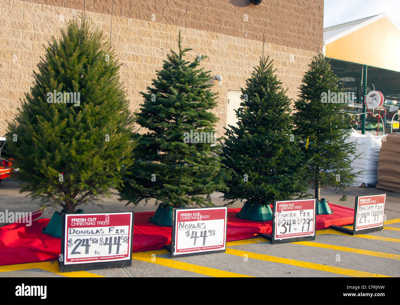 Different types of christmas trees for sale