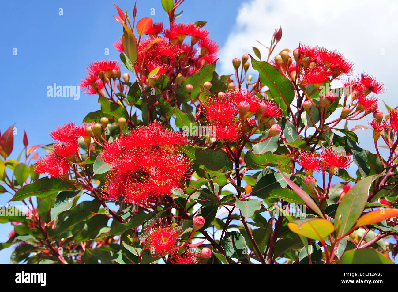 Blue Flowers Australia Blue Mountains Flower Australia Stock Photos And Blue