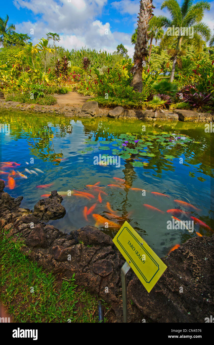 The Plantation Garden Tour at the Dole Plantation in Wahiawa, Oahu Stock Photo - Alamy
