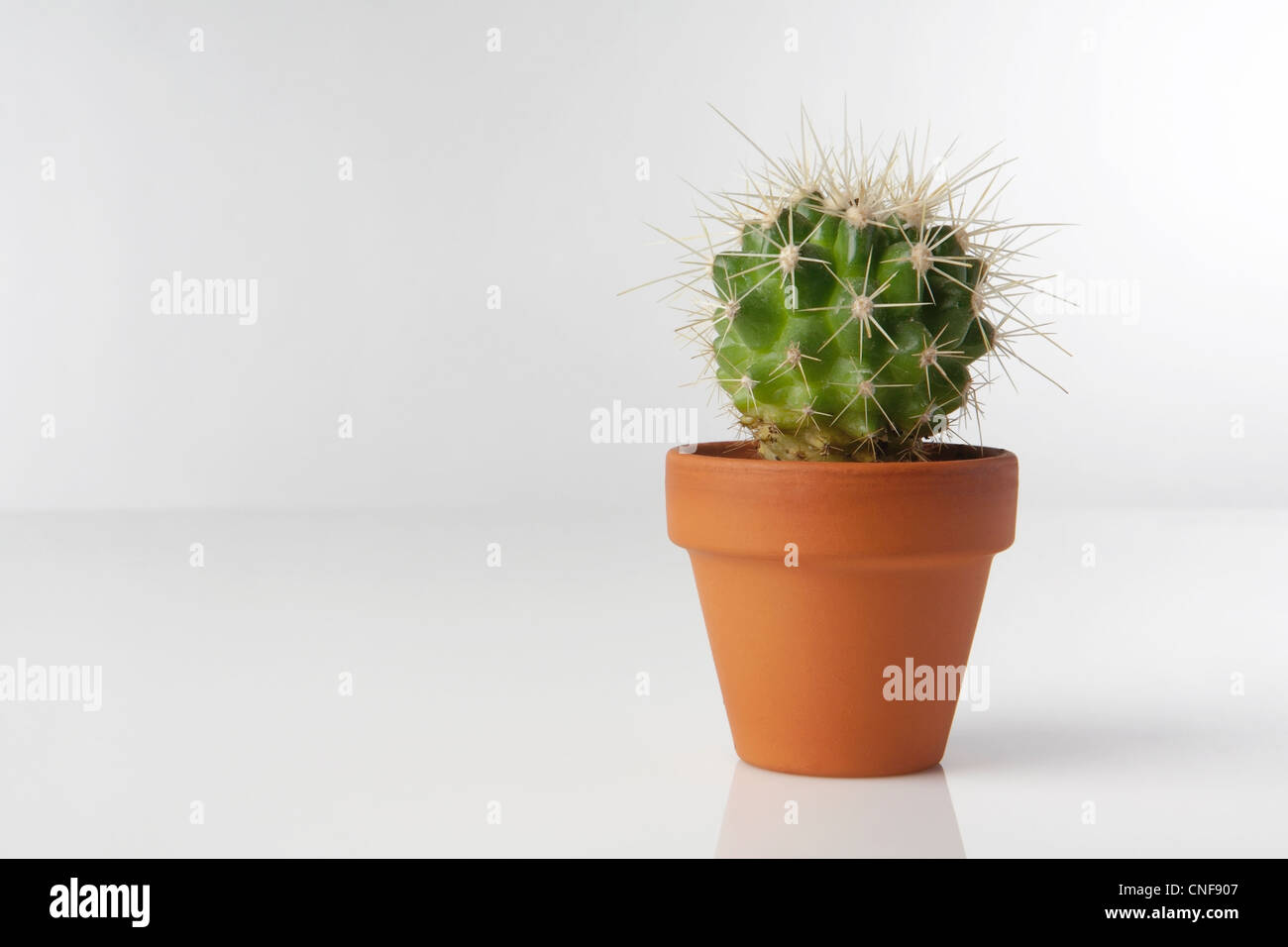 Cactus Planting Pots Cactus Plant Pot Stock Photos Cactus Plant Pot Stock Images Alamy