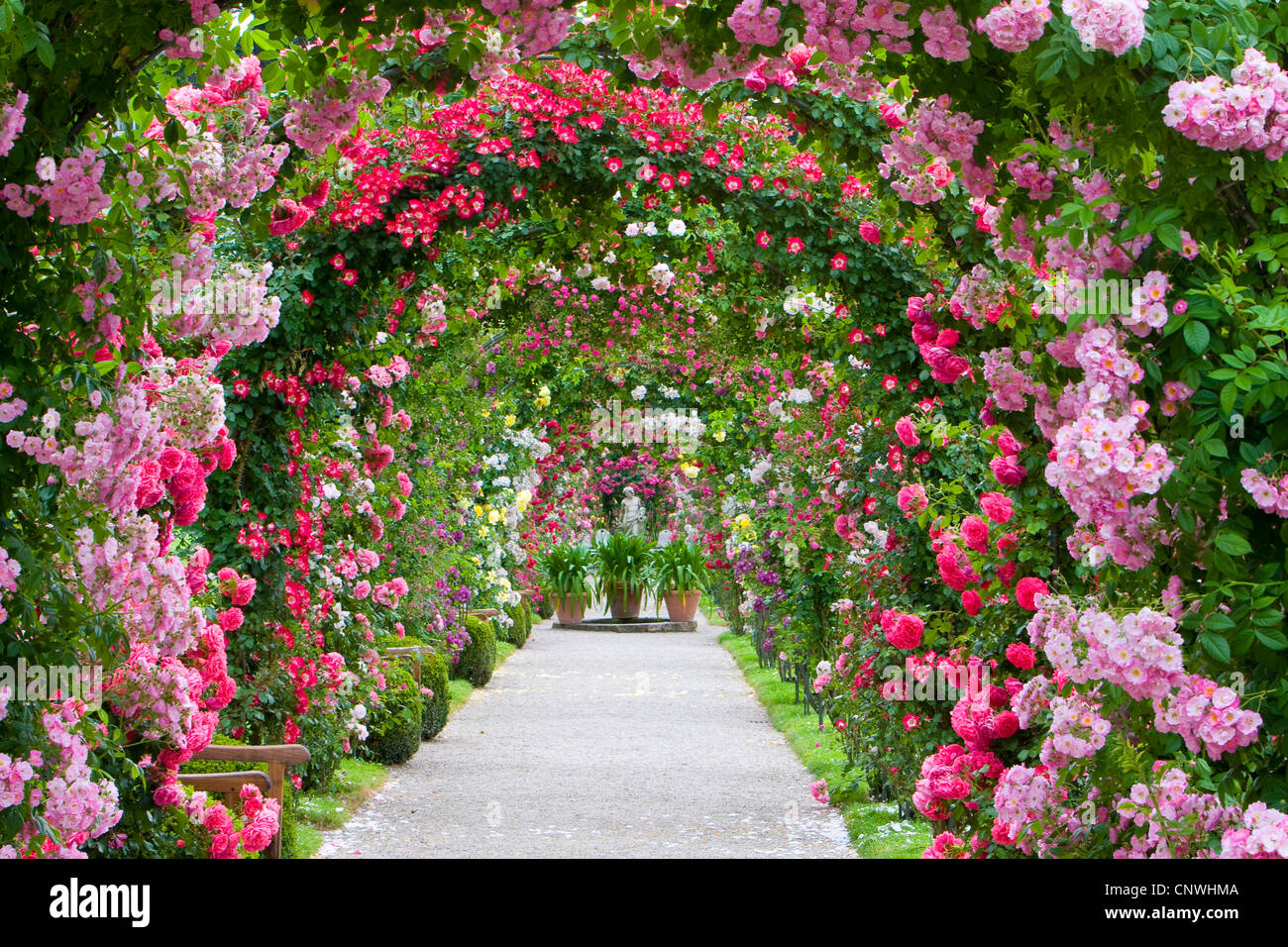 Girl In Woods Wallpaper Ornamental Rose Rosa Spec Rose Arches In A Rose Garden