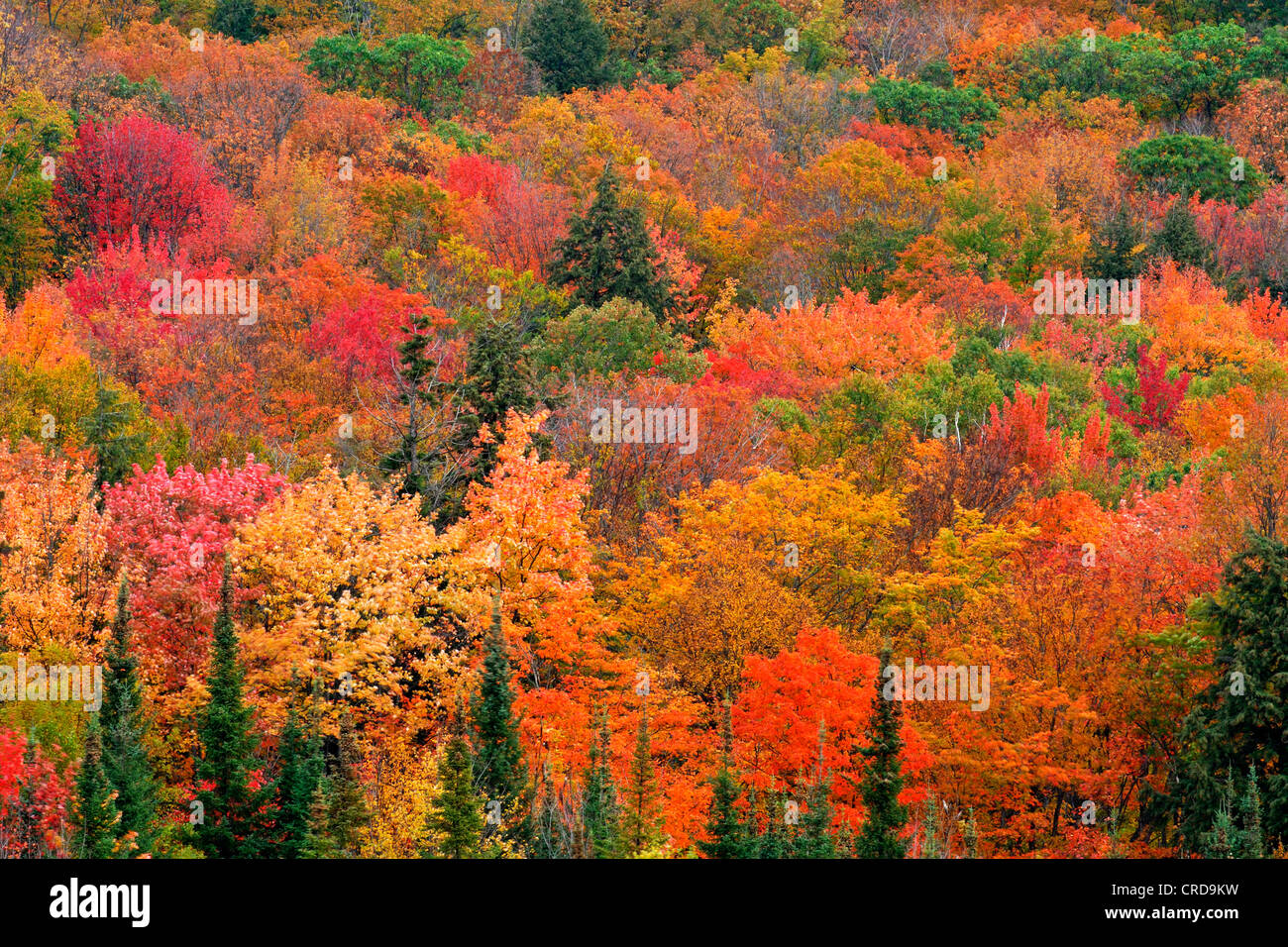 Live Wallpaper Fall Leaves Mixed Forest In Autumn Colours Canada Ontario Algonquin