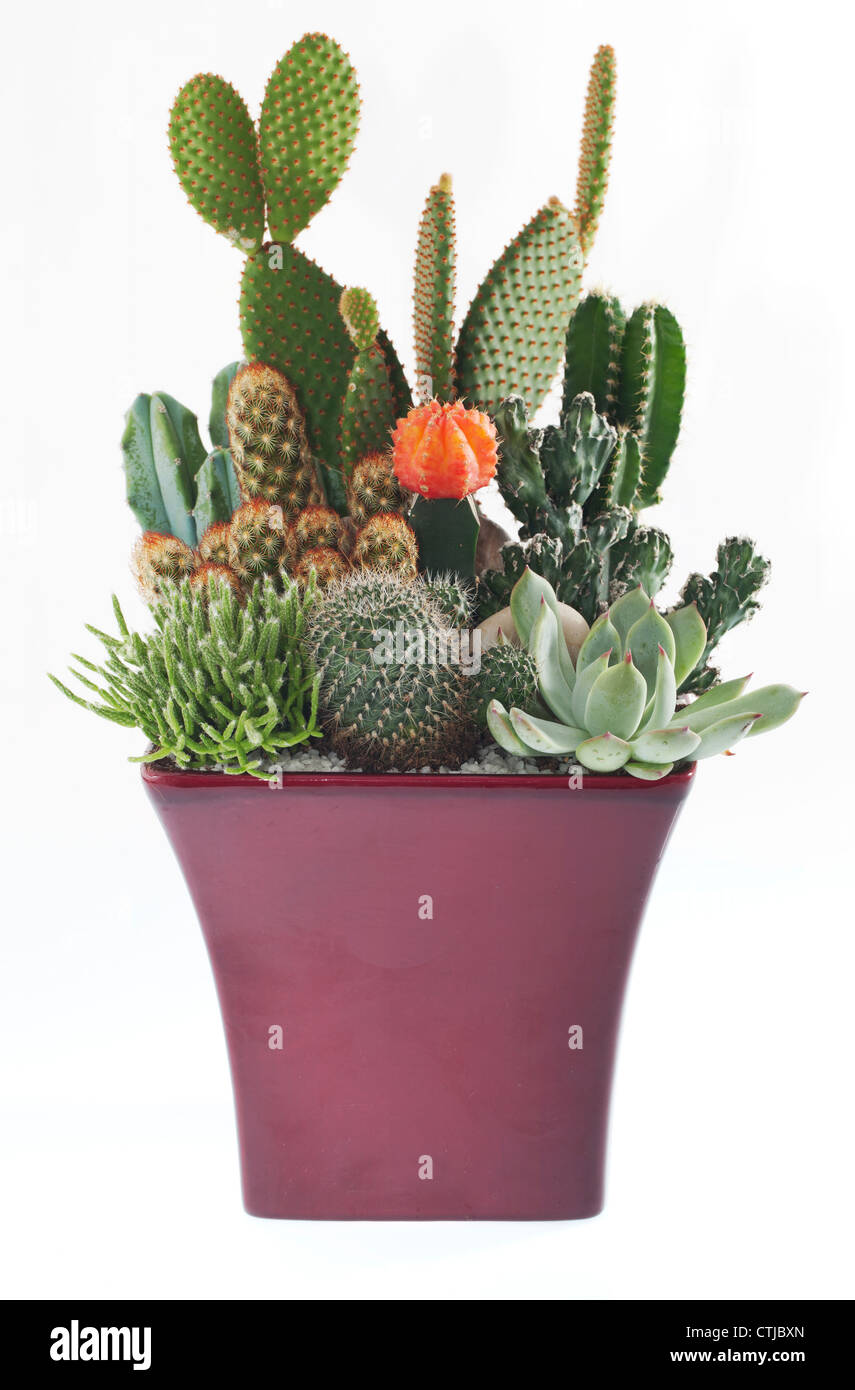 Cactus Planting Pots Cactus Plant Pot Cut Out Stock Images Pictures Alamy