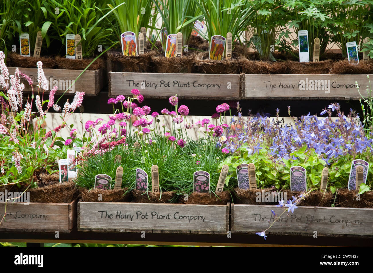 Plant Pot Sale Nursery Bedding Plants Stock Photos And Nursery Bedding