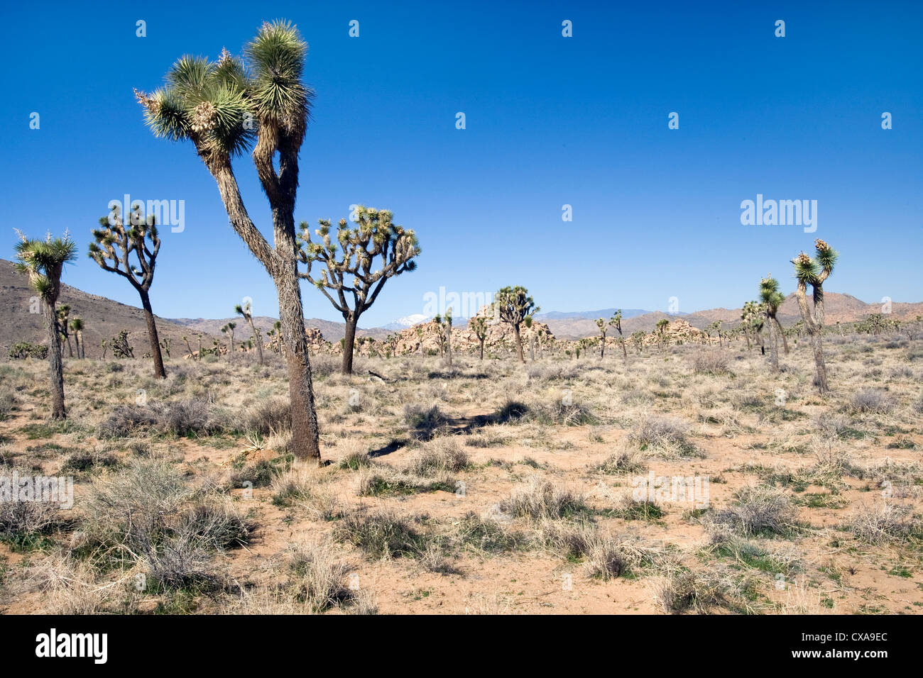 Arid Forest Stock Photos Arid Forest Stock Images Alamy