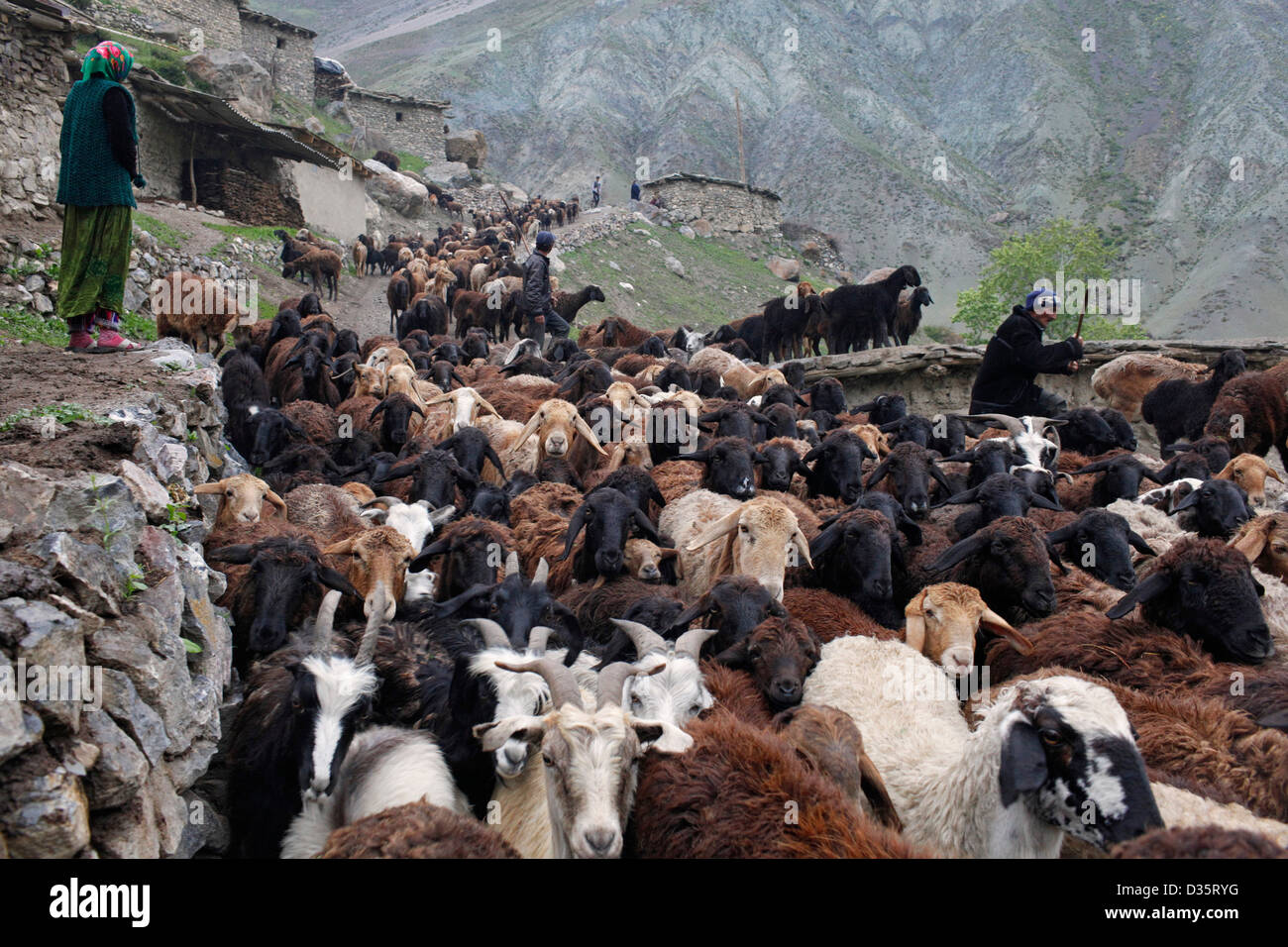 Obi Herd Yaghnobi Shepherds During Their Annual Migration To The High