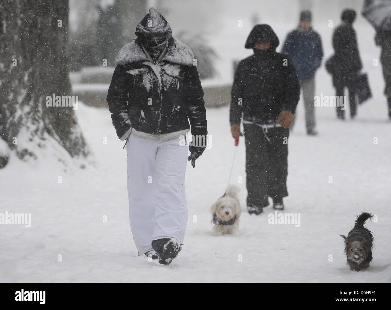 Barzubehör Hamburg Brave Dogs High Resolution Stock Photography And Images - Alamy