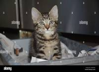 Cat, Litter Tray Stock Photos & Cat, Litter Tray Stock ...