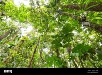 Rainforest Canopy Plants | www.pixshark.com - Images ...