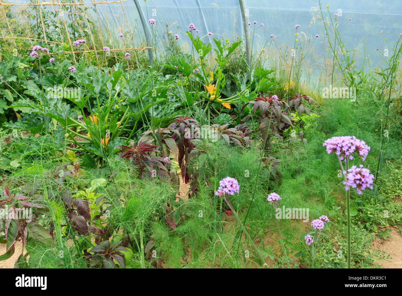 Serre Tunnel Svl Potager Garden Stock Photos Potager Garden Stock Images Alamy