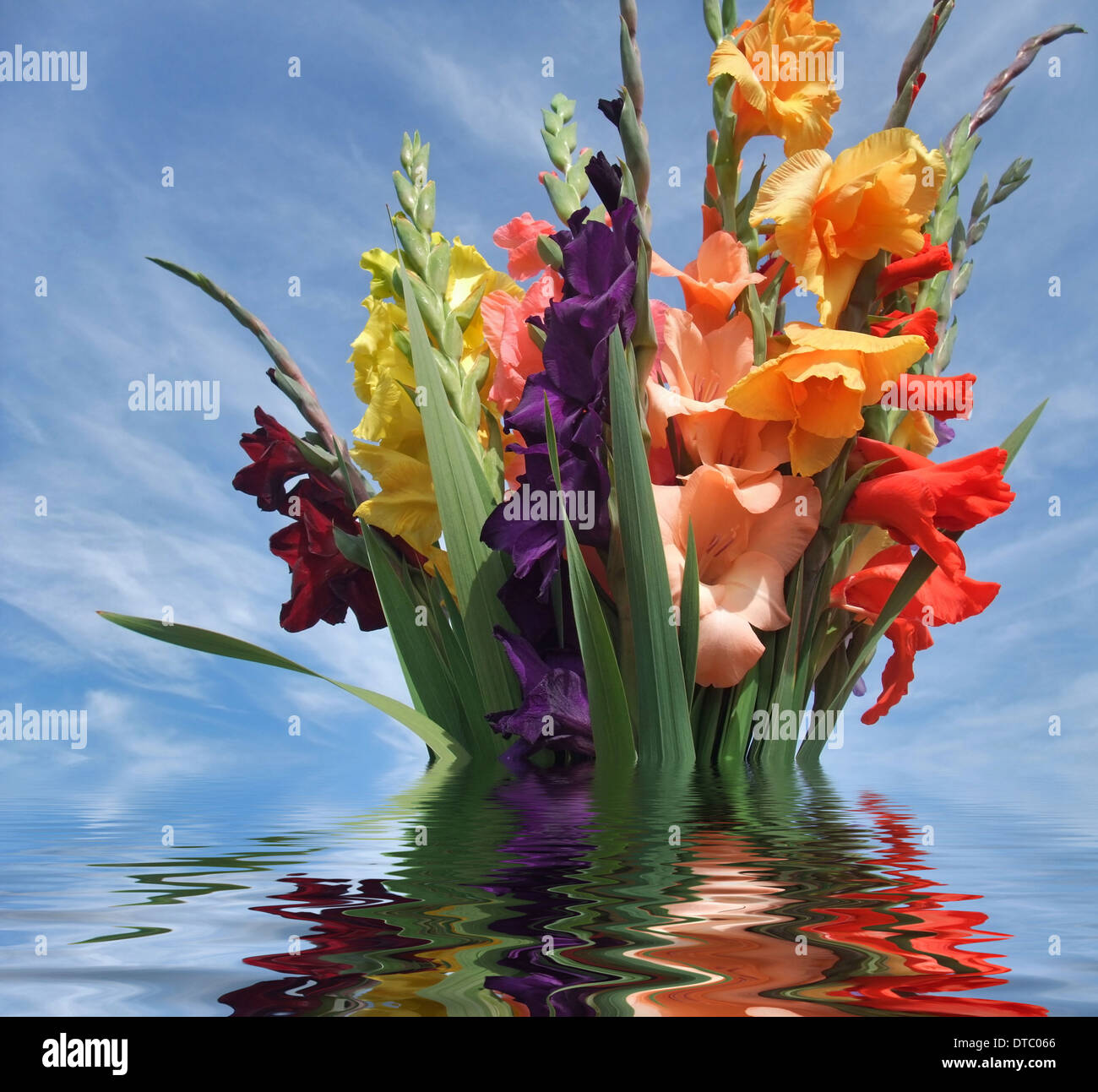 Bos Gladiolen Flower Flowers Plant Bouquet Gladiolus Stock Photos