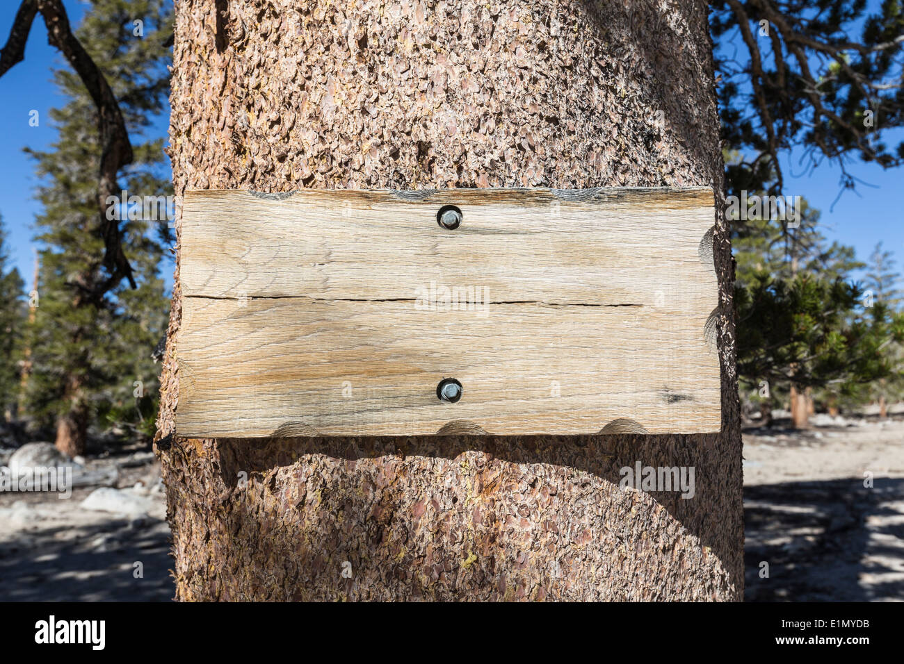 Blank Rustic Wood Sign On Pine Tree Stock Photo Alamy
