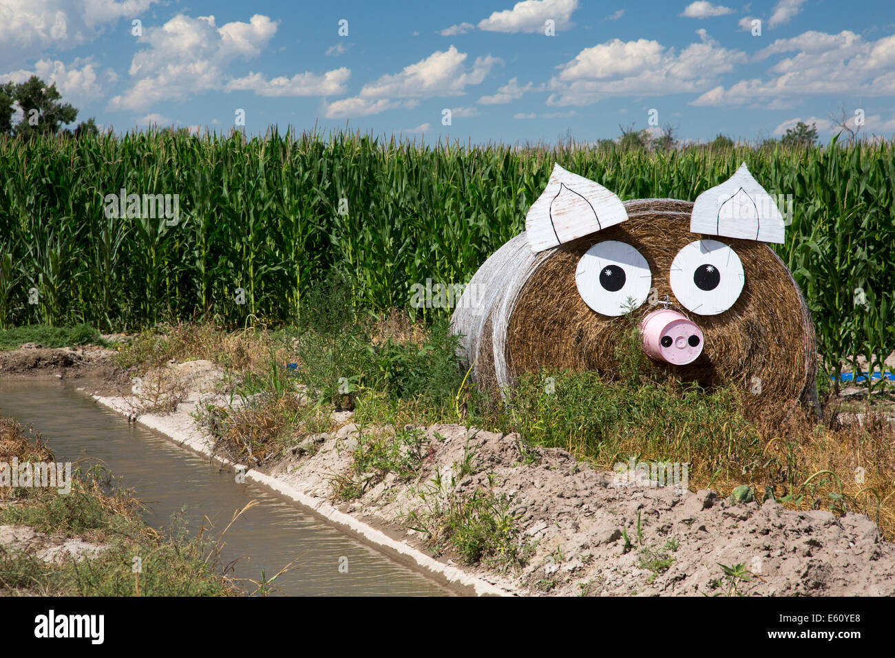 Hay Decoration Hay Bale Decorating Topsimages