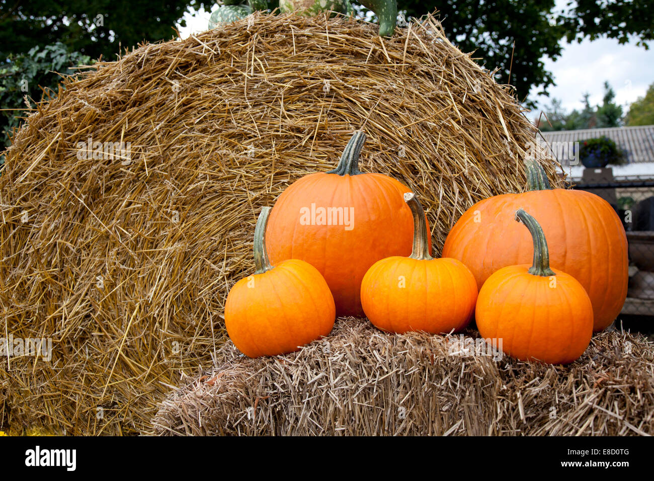 Hay Decoration Hay Bale Fall Decoration Stock Photos And Hay Bale Fall