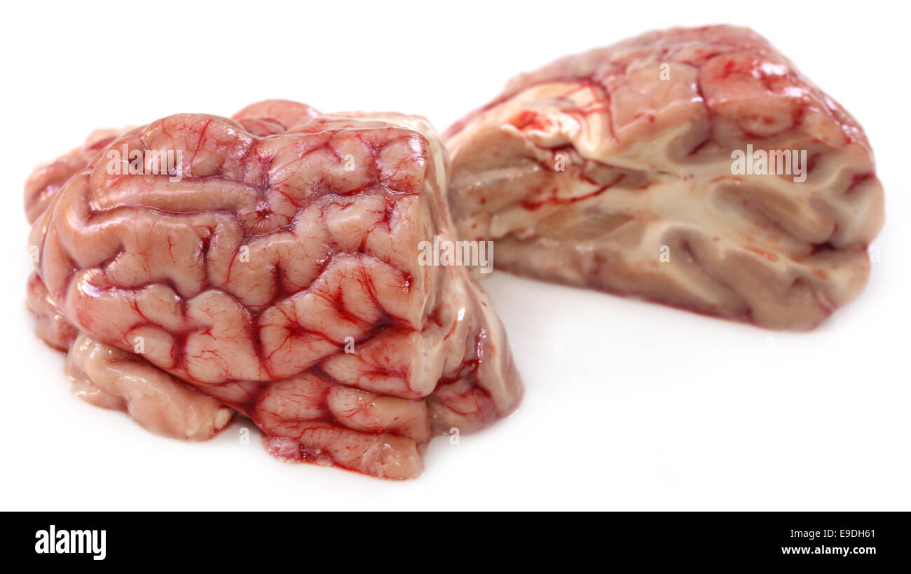 Cow Brain High Resolution Stock Photography And Images Alamy