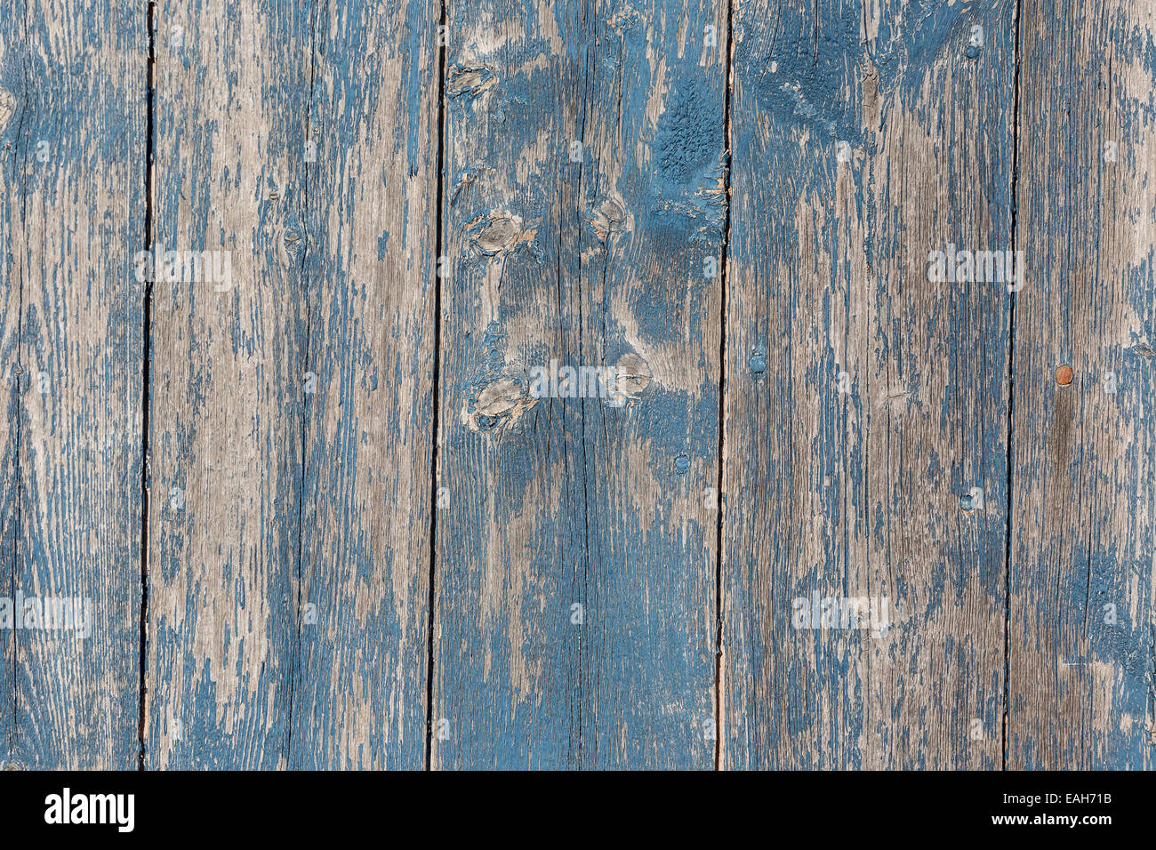 Fall Tree And Black Fence Wallpaper Old Wooden Barn Board With Distressed Blue Paint Stock