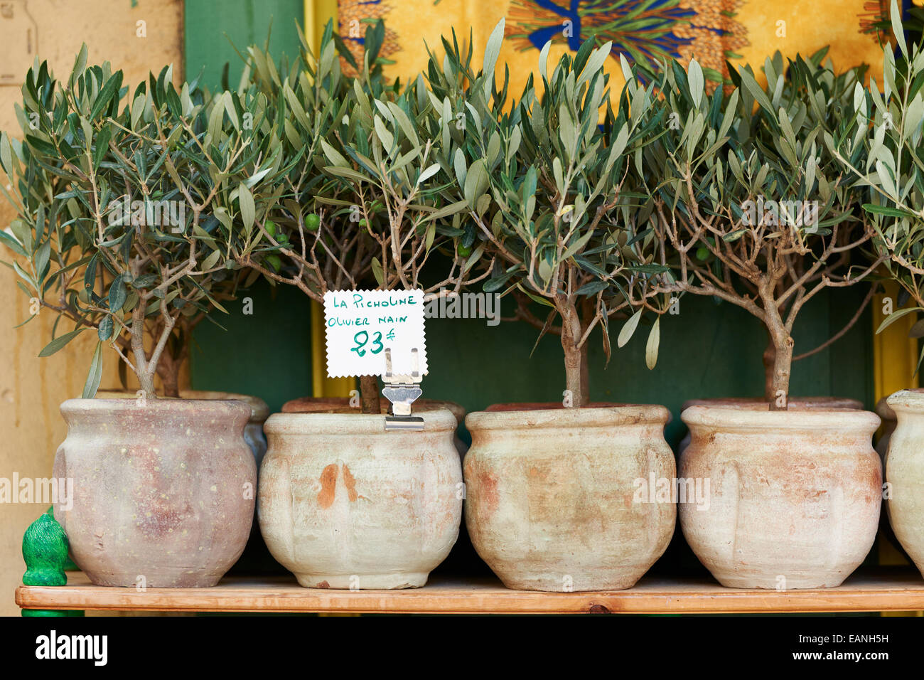 Plant Pot Sale Small Olive Trees In Pots Bonsai Plants For Sale In