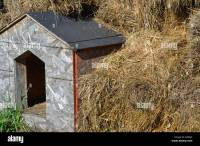 hay or straw around dog house Stock Photo, Royalty Free ...