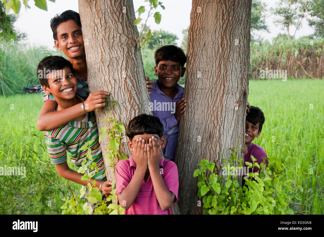 Hide And Seek Kids Indian Rural Children Group Farm Playing Hide And Seek Stock Photo