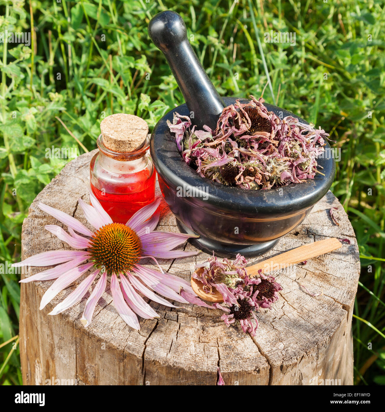 Cuisines Vial Black Mortar With Dried Coneflowers And Vial With Essential Oil In