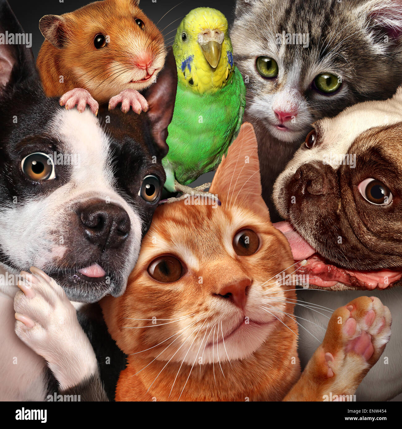 Cute Baby Pets Live Wallpaper Download Pet Group Concept As Dogs Cats A Hamster And Budgie