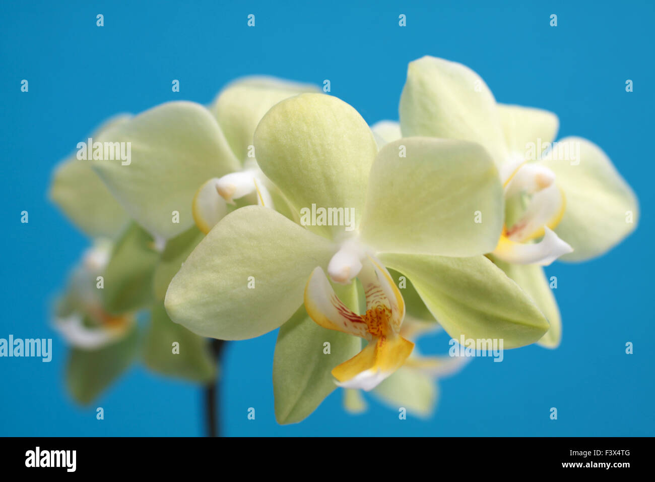 Orchidee Blume Bluete Blume Orchidee Stock Photos Bluete Blume Orchidee Stock