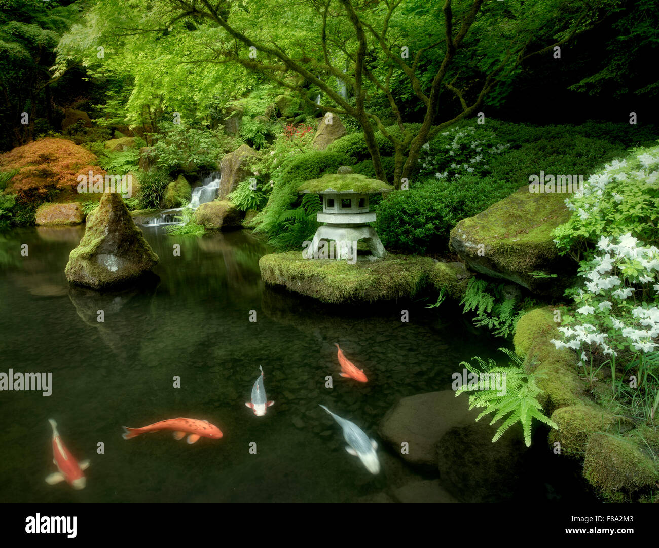 Waterfall Live Wallpaper Hd 3d Koi In Pond With Japanese Lantern And Waterfalls Japanese