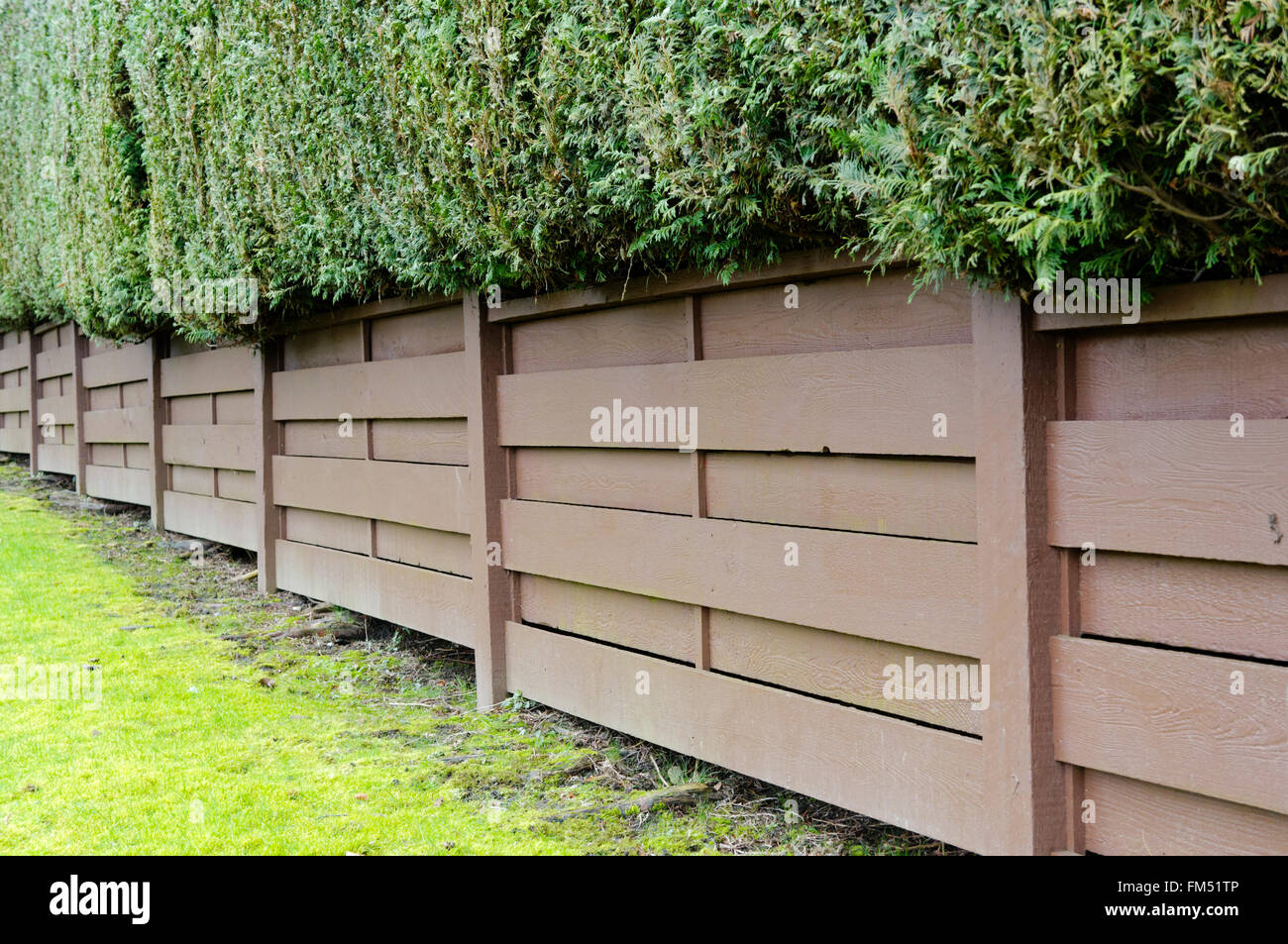 Backyard Fence Backyard Brown Wooden Fence And Green Western Red Cedar Hedge