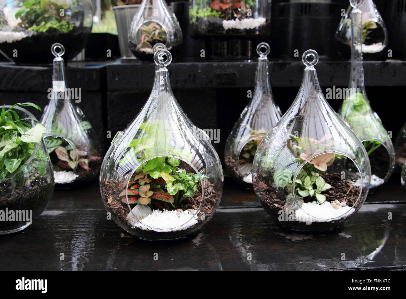 Inside Plants Terrariums With Plants Inside Glass Jar Stock Photo