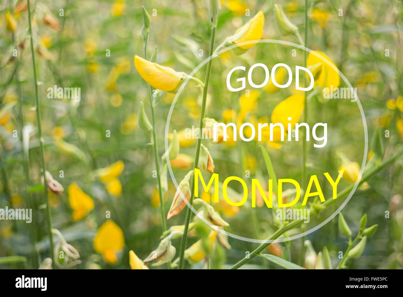 Lightbox Quotes Good Morning Monday Quote Design Poster, Stock Photo Stock