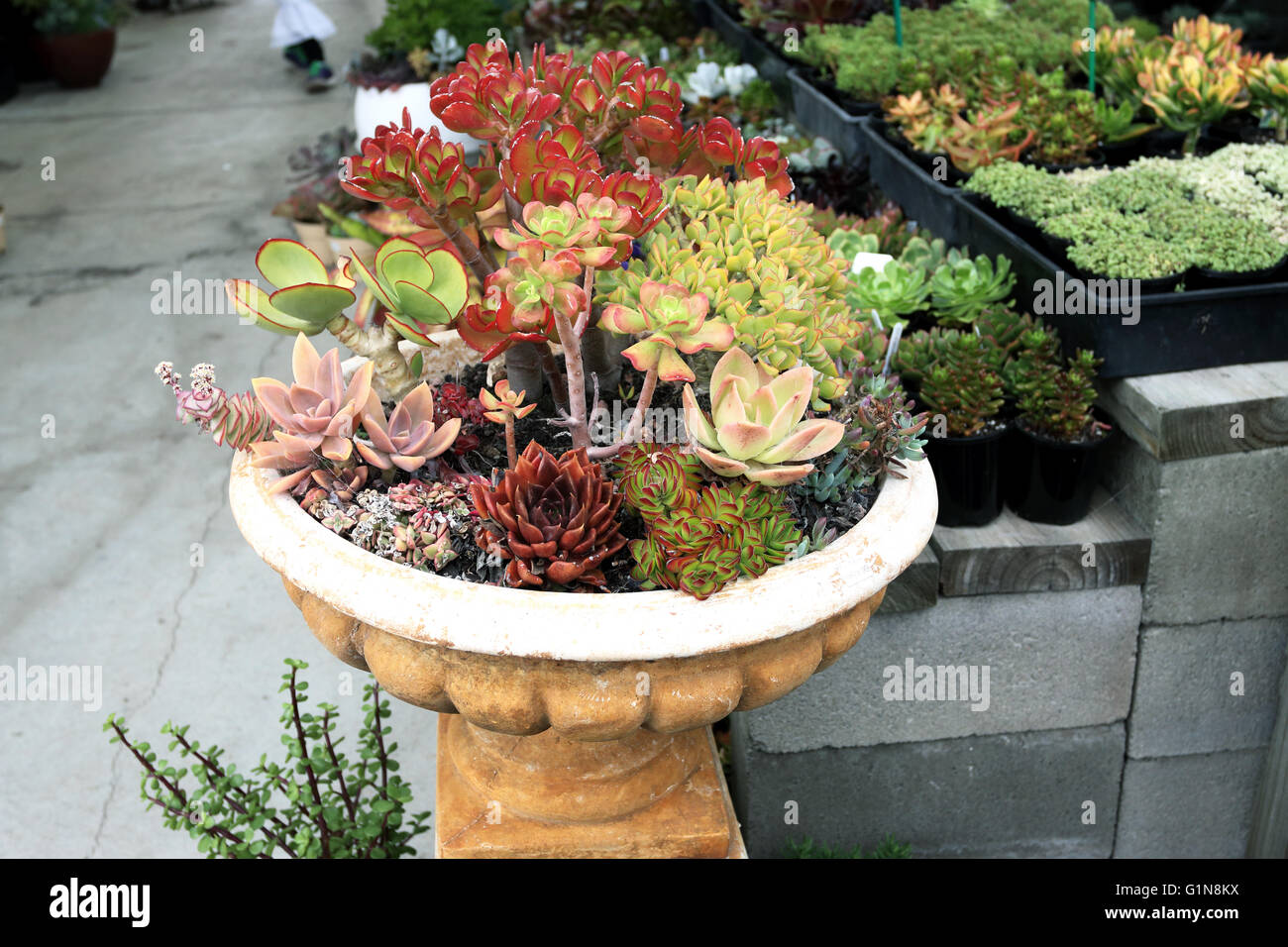 Cactus Pots For Sale Mixed Varieties Of Succulent Growing In A Pot For Sale