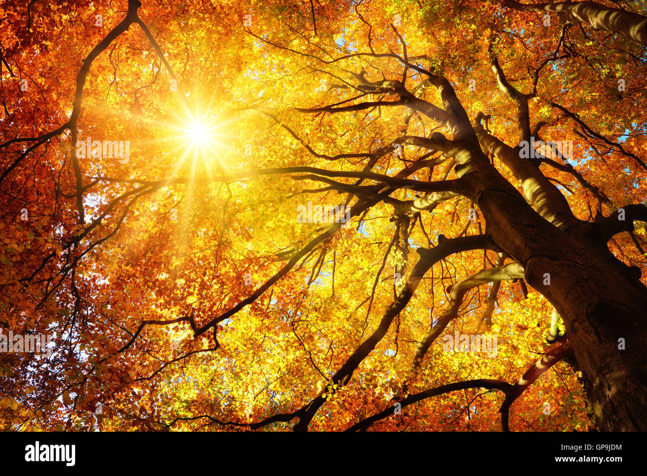 Autumn Fall Live Wallpaper Autumn Sun Shining Warmly Through The Leaves Of A Majestic