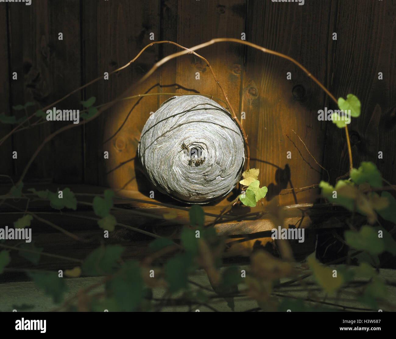 Holzvertäfelung Bilder Wasps Nest Holzvertäfelung Wooden Wall Wooden Insects Stock