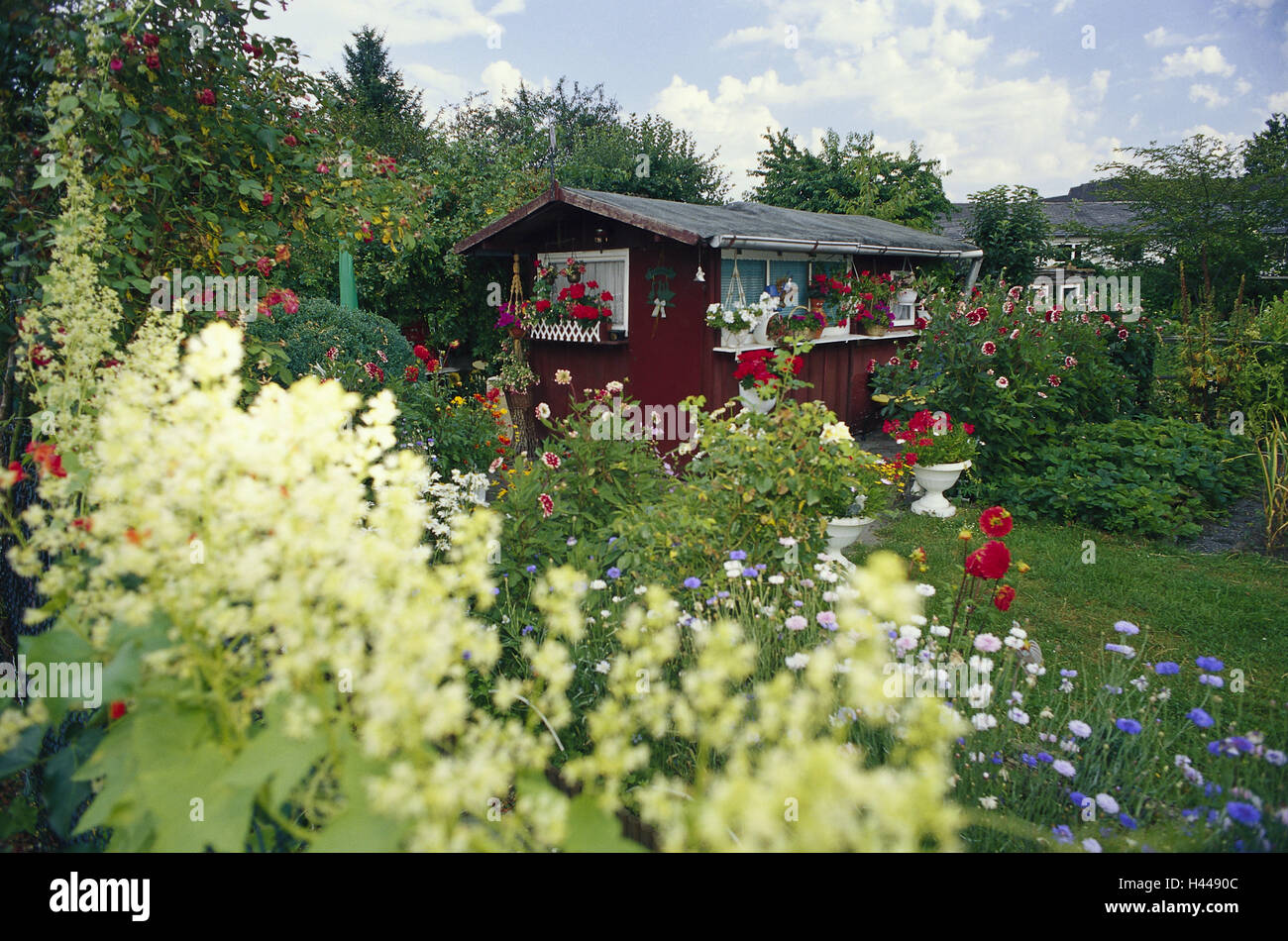 Small House Plants With Flowers Allotment Garden Garden Small House Flowers Blossom Idyll