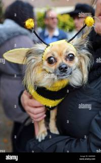 Dog In Bee Costume Stock Photos & Dog In Bee Costume Stock ...