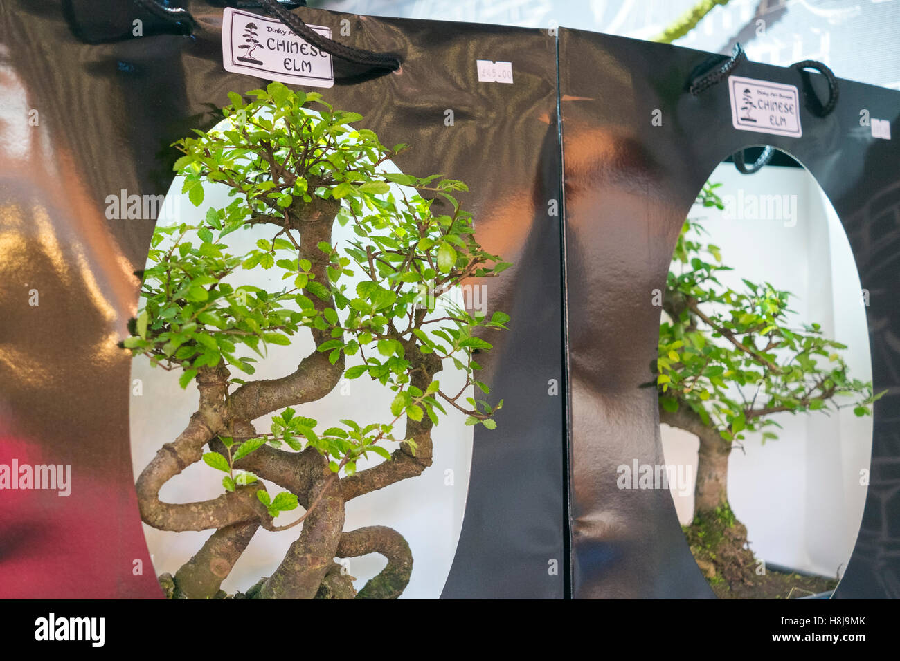 Chinese Elm Stock Photos Chinese Elm Stock Images Alamy