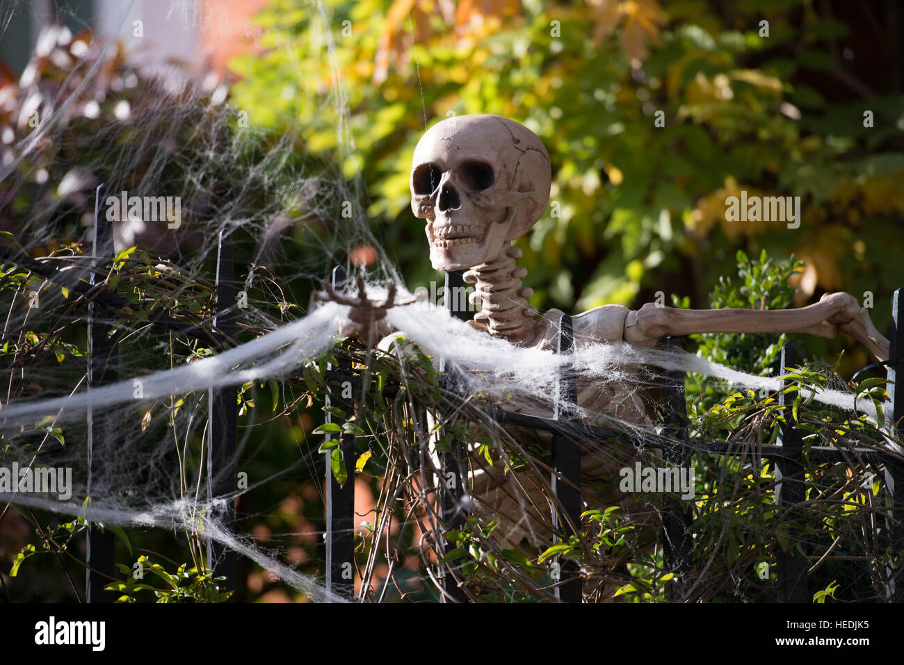Funny Skeletons High Resolution Stock Photography And Images Alamy