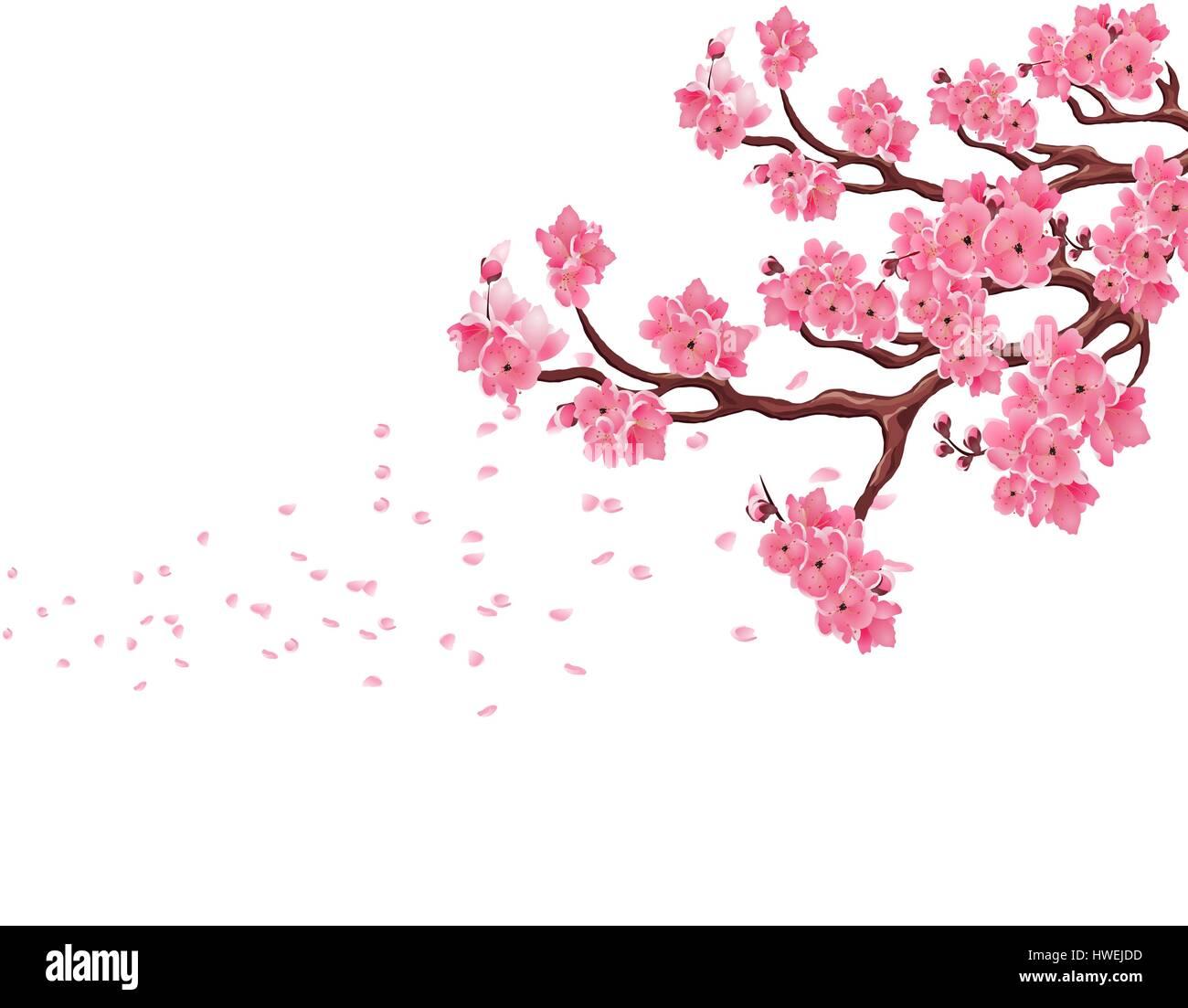 Sakura Falling Live Wallpaper Branches With Pink Cherry Blossoms Sakura The Petals Fly