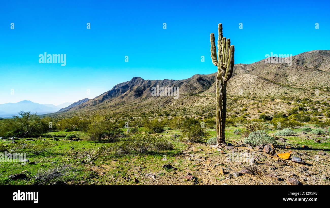 Beautiful One A Beautiful One Day Hike In South Mountain Park With Big Saguaro
