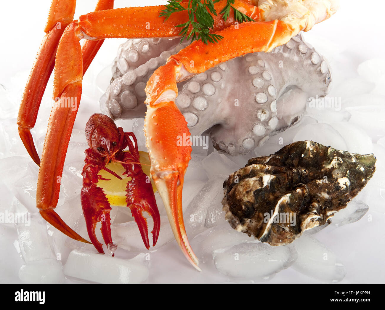 Flusskrebs Essen Ice Crab Seafood Squid Food Aliment Ice Gourmet Cancer Dish Meal