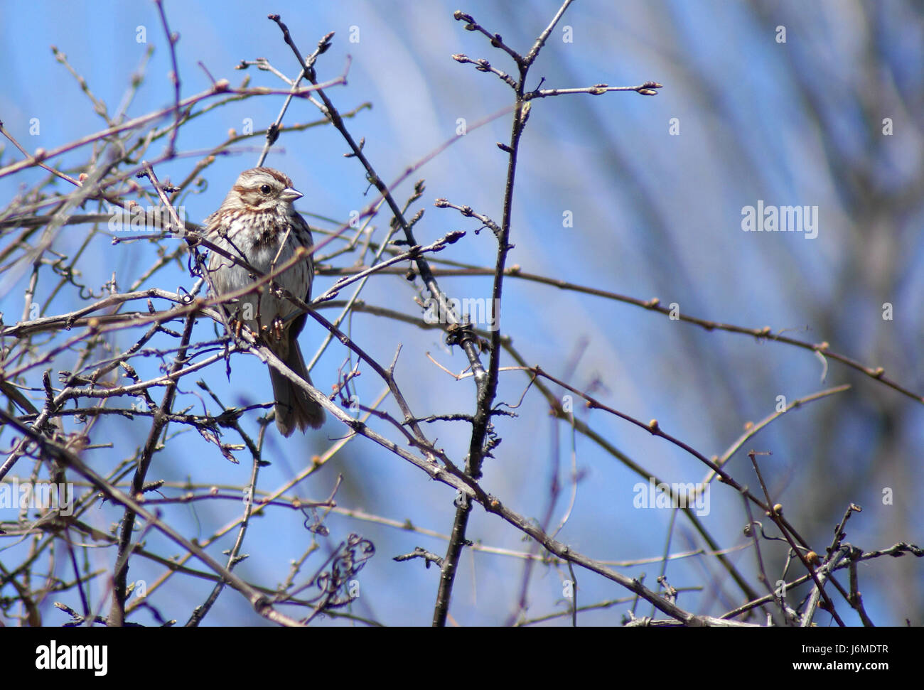 Page 2 Brown Little Cute Sparrow Wild Bird Tiny Small High Resolution Stock Photography And Images Alamy