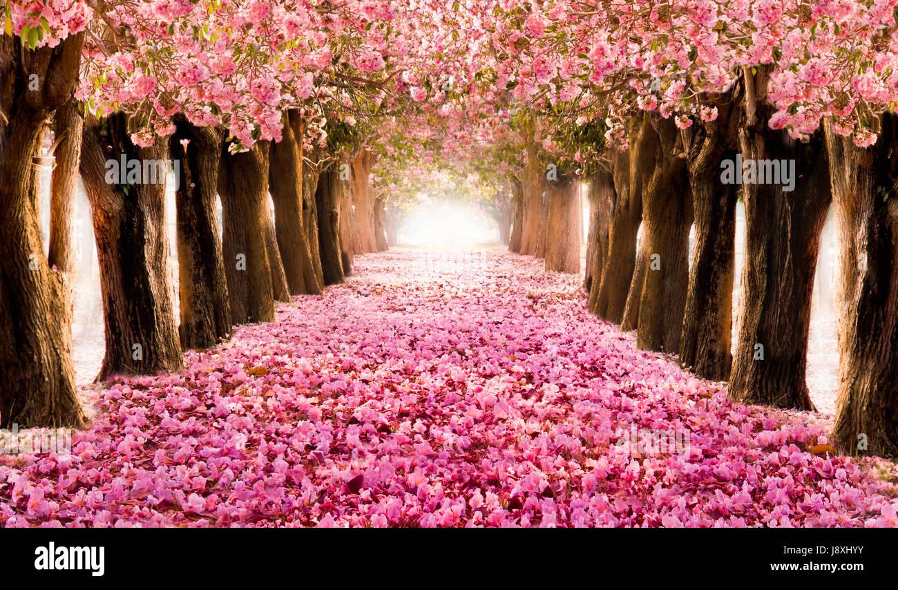 Sakura Falling Live Wallpaper Falling Petal Over The Romantic Tunnel Of Pink Flower
