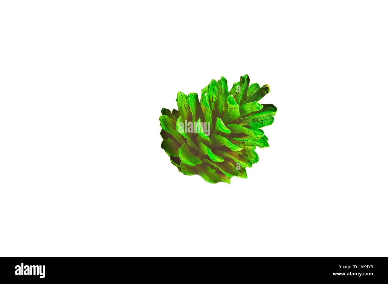 Kiefernzapfen Symbolik Tannenzapfen Cut Out Stock Images Pictures Alamy