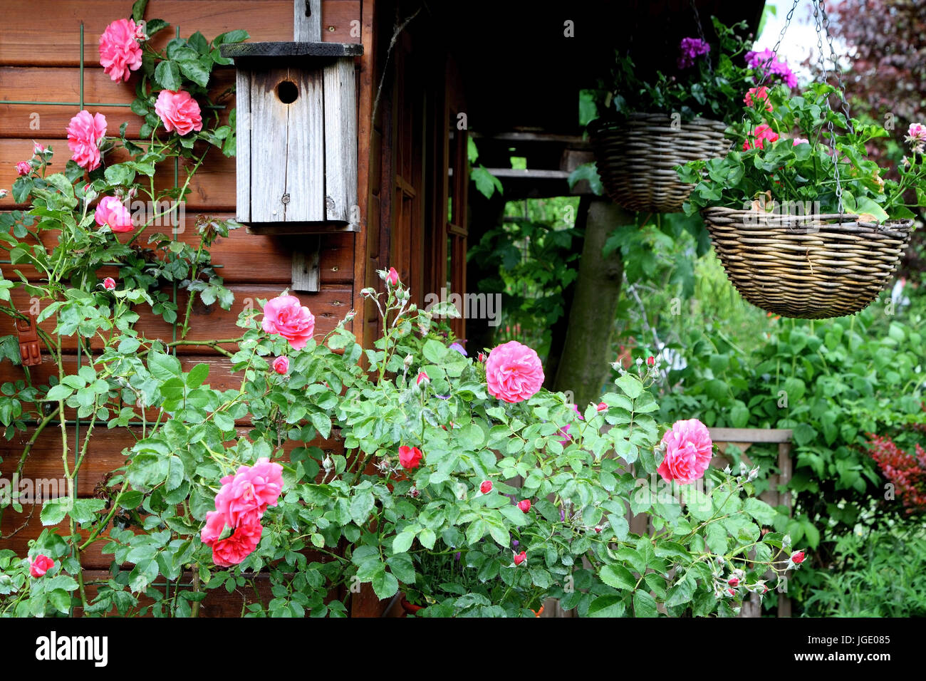 Gartenhaus Sale Summer House With Bird S Nesting Box And Roses Gartenhaus Mit