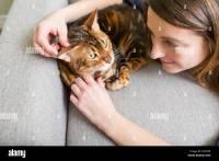 Warm Living Room Cat Stock Photos & Warm Living Room Cat ...