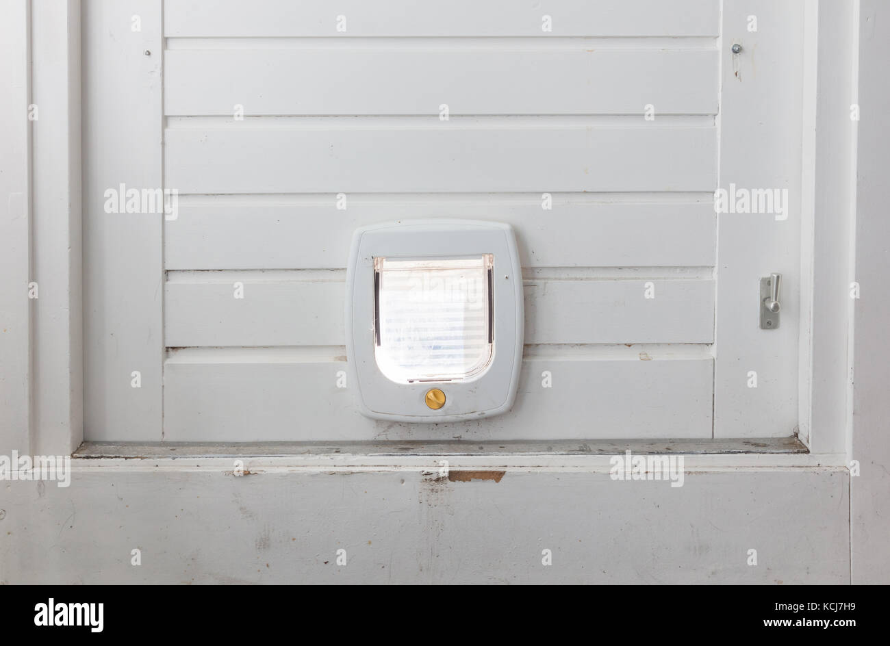 Flapon Inside View Regular White Cat Flap On Light Door Stock Photos