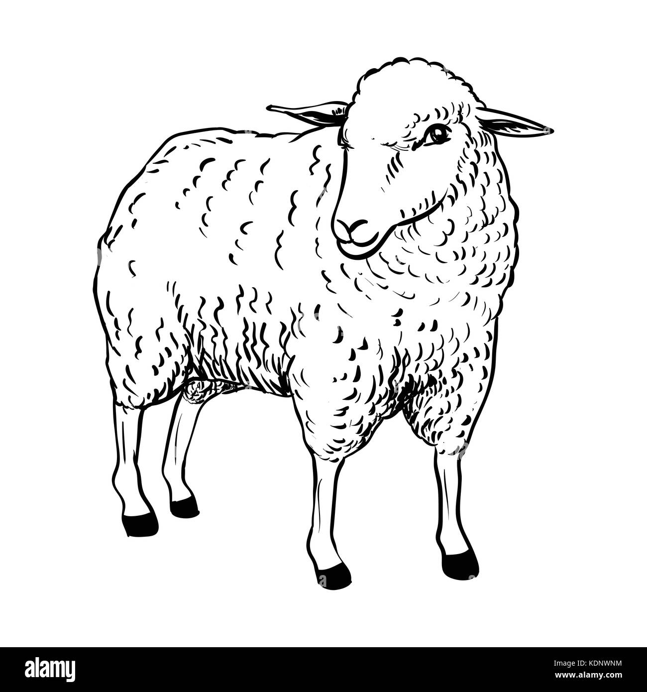 Disegno Di Pecora Hand Drawing Of Cartoon Sheep Sketch Design For Coloring