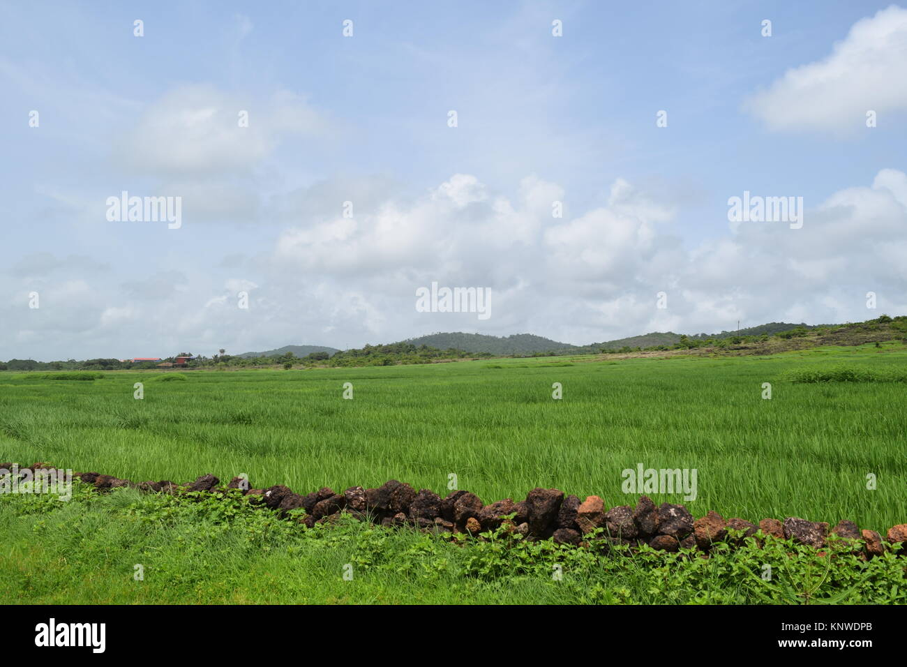 Beautiful Farmhouse In Kerala Green Farms Land For Sale Stock Photos Green Farms Land For Sale